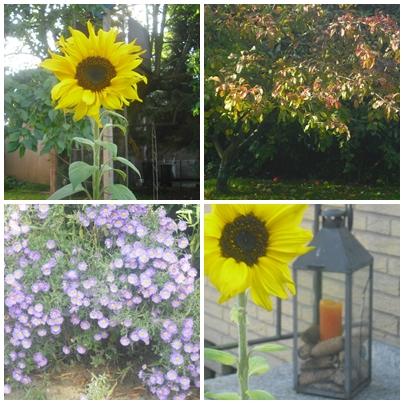 Herbst im eigenen Garten